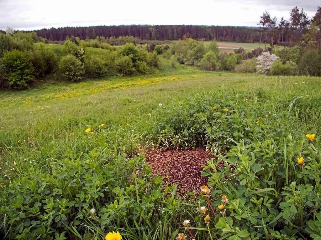 Medaus Kalno skruzdėlynas