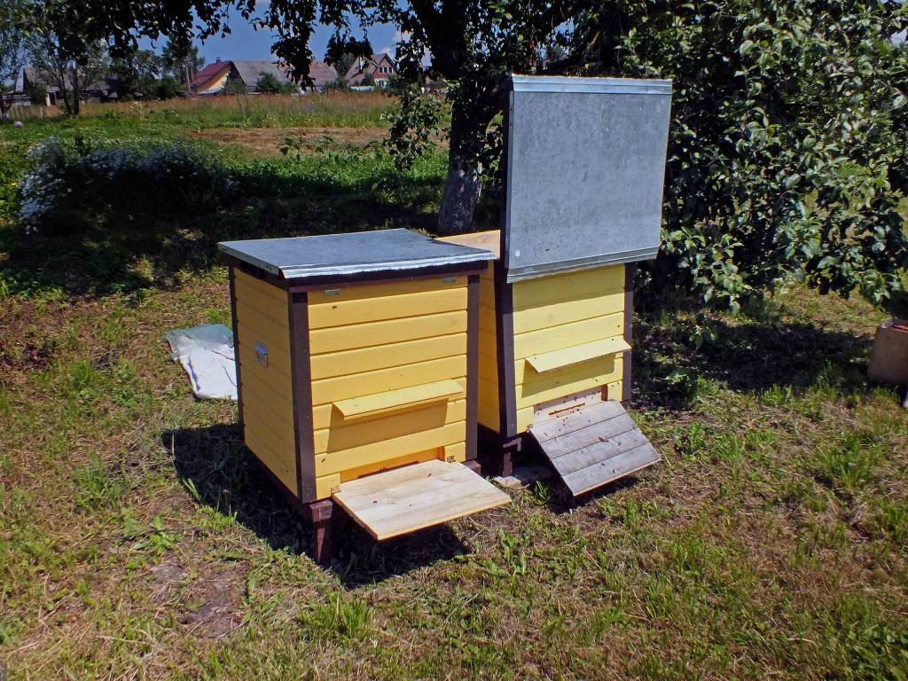 keliam bites iš vieno avilio į kitą
