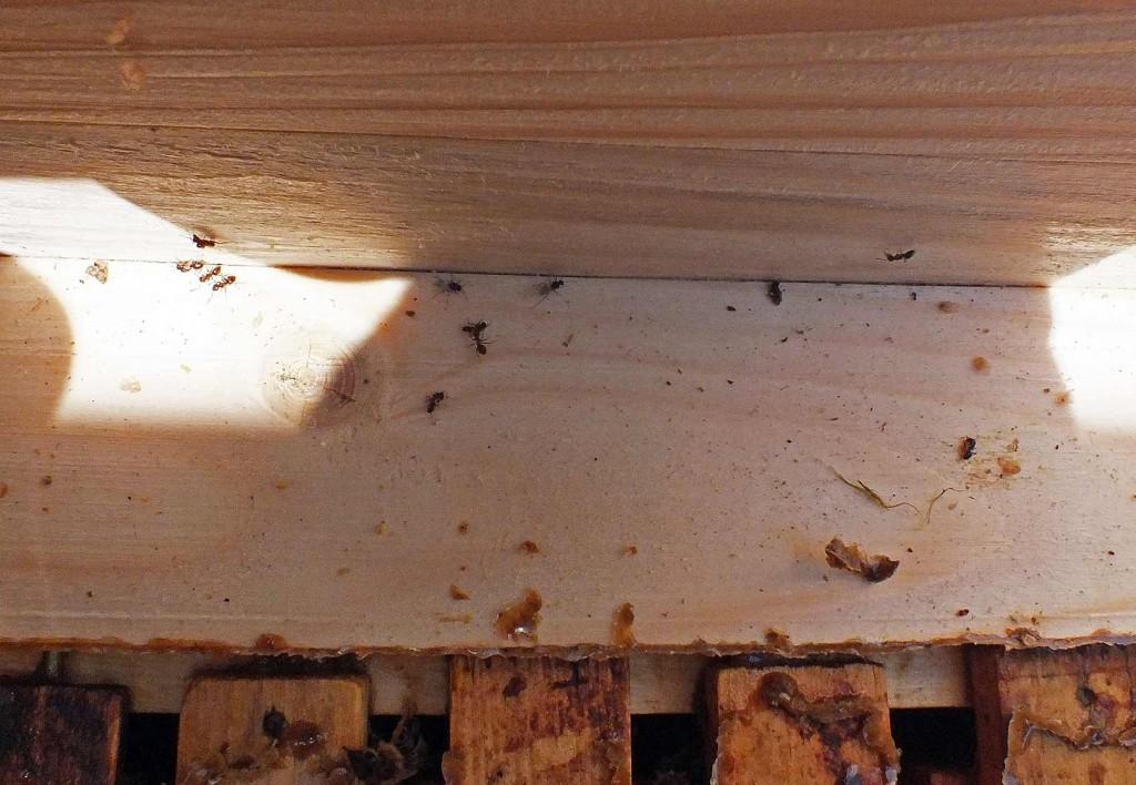 skruzdėlės avilyje