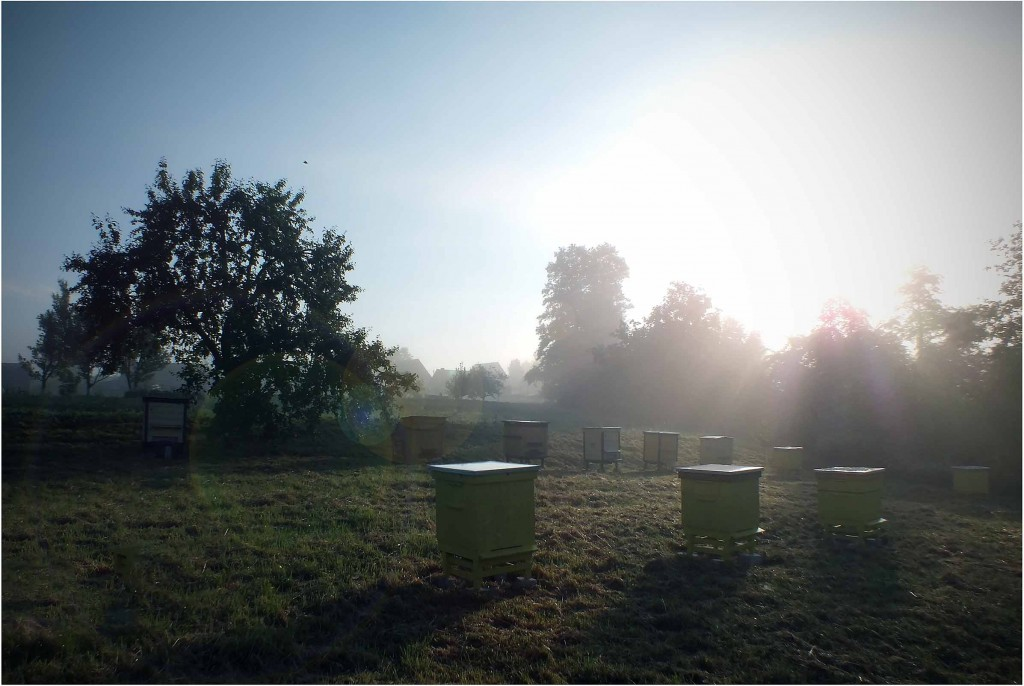 rytas bityne