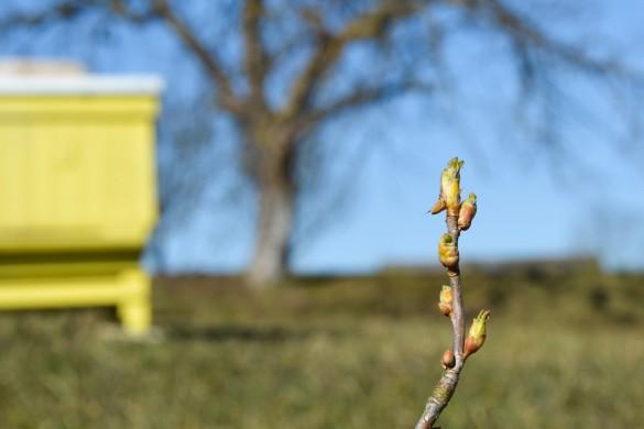 pavasaris bityne