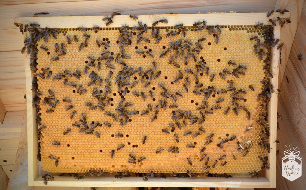 bičių darbininkių perai Medaus kalnas