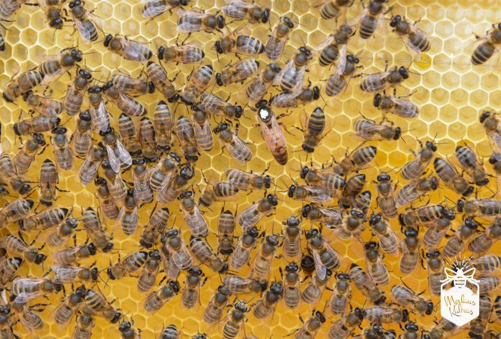bičių-motinėlė-Medaus-klnas