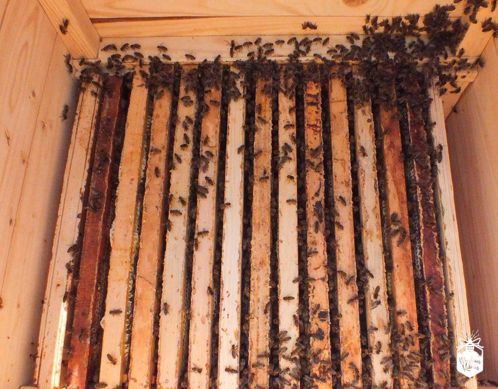 bičių lizdas Medaus kalnas