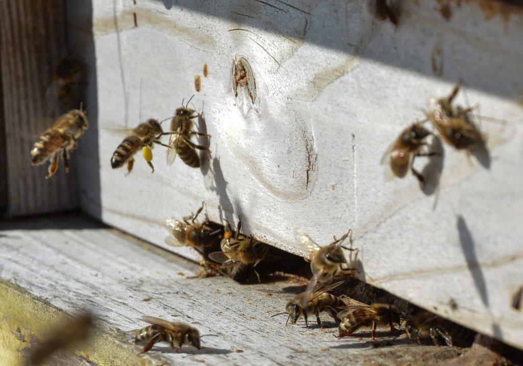 bitės medaus kalnas