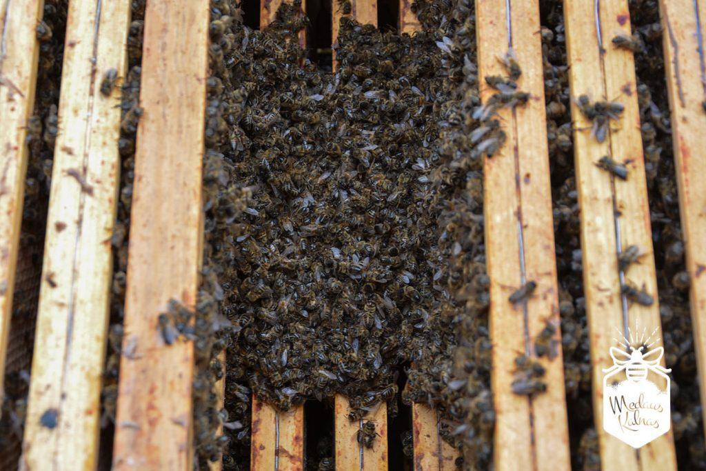 Mirusi bičių šeima